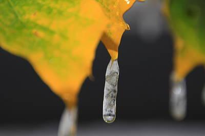 Fall Icicles Original by Cynthia  Cox Cottam