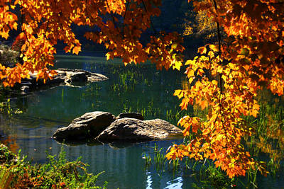Photograph - Fall In Central Park by Emanuel Tanjala