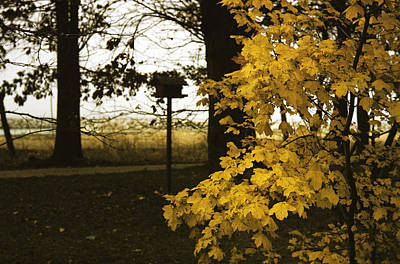 Photograph - Fall In Lausanne by Dragan Kudjerski