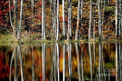 Nys Photograph - Fall In New York by Mark Gilman