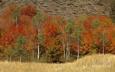 Photograph - Fall In Snake River Canyon by Sandra Bronstein