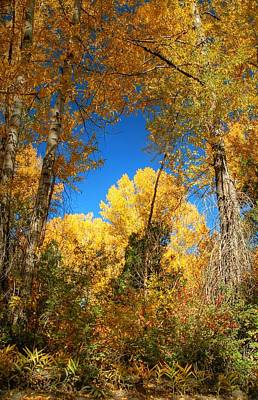 Photograph - Fall In The San Juans Of Colorado by Ken Smith