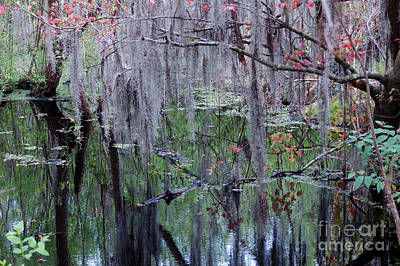 Photograph - Fall In The South by Nancy Greenland