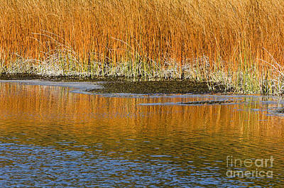Photograph - Fall In Yellowstone National Park by Sandra Bronstein