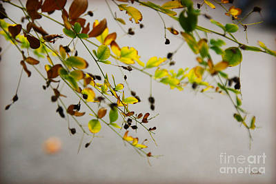 Photograph - Fall by Eena Bo