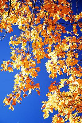 Photograph - Fall Is In The Air by Larry Ricker