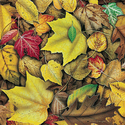 Oaks Painting - Fall Leaf Study by JQ Licensing