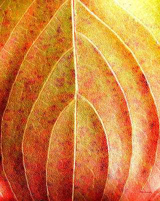 Photograph - Fall Leaf Upclose by Duane McCullough