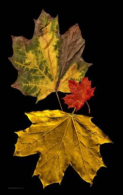 Stained Photograph - Fall Leave Art by Mario Perez