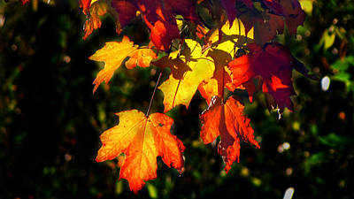 Photograph - Fall Leaves 1 by Ms Judi