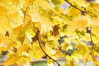 Photograph - Fall Leaves Abstract by Alice Gipson