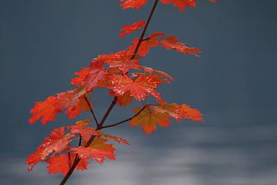 Photograph - Fall Leaves by Cathie Douglas