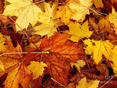 Photograph - Fall Leaves by Erica Hanel