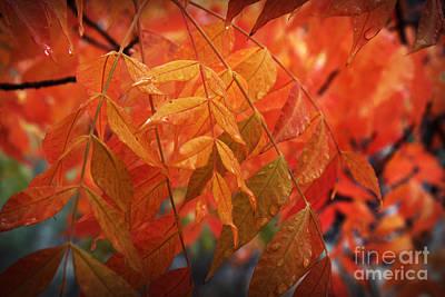 Fall Leaves In Gold Art Print