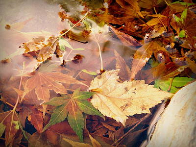 Photograph - Fall Leaves In Pond by Cindy Wright