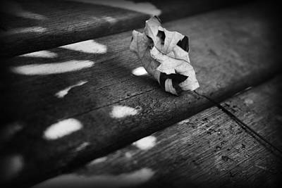 Photograph - Fall Leaves Iv by Kelly Hazel