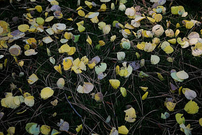 Fall Leaves Art Print by John Wong