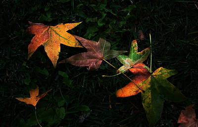 Photograph - Fall Leaves On Grass by Dorothy Cunningham