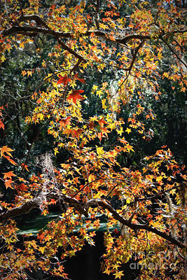 Photograph - Fall Leaves Over Florida Pond by Carol Groenen