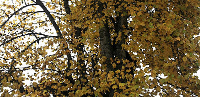 Photograph - Fall Leaves Panorama by Mary Gaines