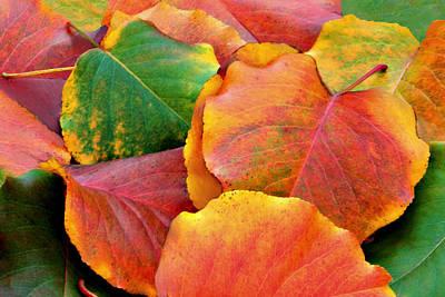 Fall Leaves Art Print by Sheila Kay McIntyre