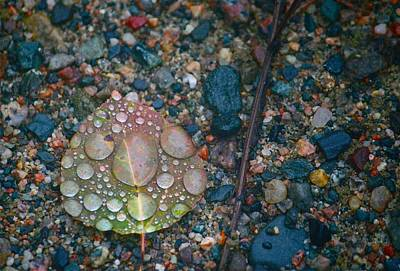 Rain Drops Photograph - Fall Magnified by Shirley Mailloux