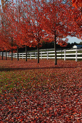 Photograph - Fall Oak Reds by Jan Piet
