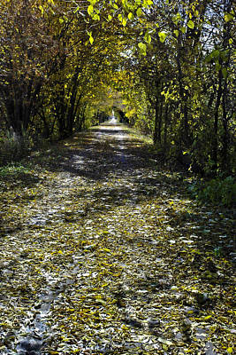Pathways Photograph - Fall On Macomb Orchard Trail by LeeAnn McLaneGoetz McLaneGoetzStudioLLCcom