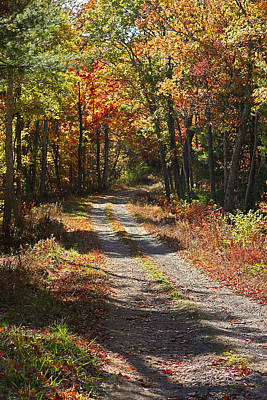 Fall On The Wyrick Trail Art Print by Denise Romano