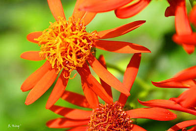 Photograph - Fall Orange Flowers by Roena King