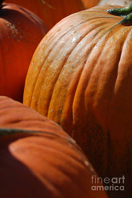 Photograph - Fall Pumpkins by First Star Art