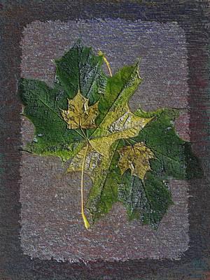 Fall Quartet Art Print by Tim Allen