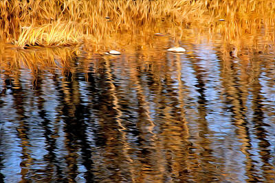 Photograph - Fall Reflection On The Poudre River by James Steele