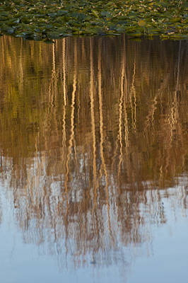 Photograph - Fall River Reflection by Carolyn Marshall