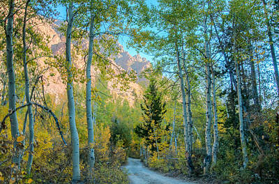 Photograph - Fall Road In The Mountains by Connie Cooper-Edwards
