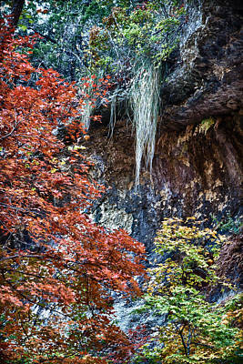 Photograph - Fall Scene At Lost Maples by James Woody