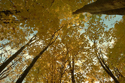 Photograph - Fall Scene by Tom Bush IV