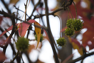 Art Print featuring the photograph Fall Seeds by Lisa Missenda