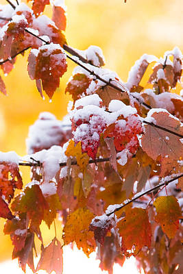 Photograph - Fall Snow by Robert Clifford