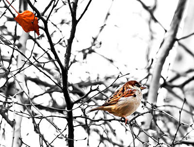 Fall Sparrow Art Print