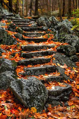 Yankees Painting - Fall Steps - Ap by Dan Carmichael