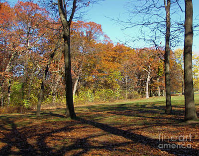 Fall Tree Shadows Art Print by Cedric Hampton