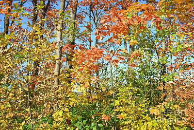 Photograph - Fall Trees by Justine Gersich