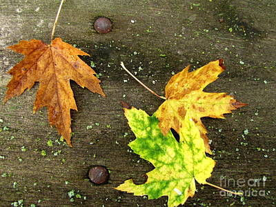 Photograph - Fall Trio by Marilyn Smith
