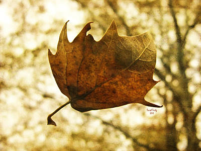 Photograph - Fall by Trish Tritz