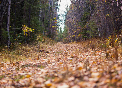 Photograph - Fall Walk On A Leaf Path by Darren Langlois