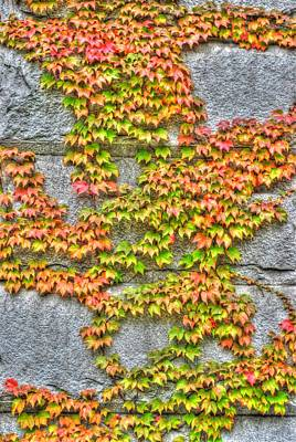 Art Print featuring the photograph Fall Wall by Michael Frank Jr
