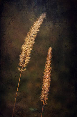 Photograph - Fall Wheat by Emily Stauring