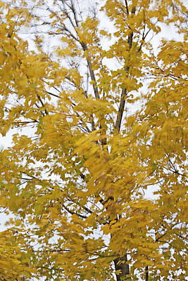 Leafy Mixed Media - Fall Wind 1 by Steve Ohlsen