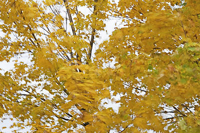 Leafy Mixed Media - Fall Wind 2 by Steve Ohlsen